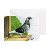 Racing Homer Pigeon Greeting Cards (Pk of 10)
