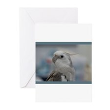 Cool Birds Greeting Cards (Pk of 20)