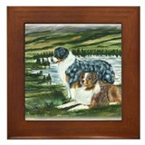 Austrailian Shepherd Blue and Framed Tile