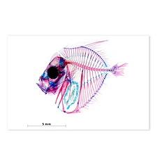 Selene-b Fish Postcards (Package of 8)