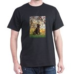 Spring / Choc Lab 11 Dark T-Shirt