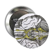 "grays brain anatomy 2.25"" Button"