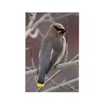 Wax Wing Rectangle Magnet (100 pack)