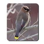 Wax Wing Mousepad