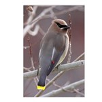 Wax Wing Postcards (Package of 8)