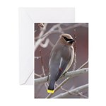 Wax Wing Greeting Cards (Pk of 20)
