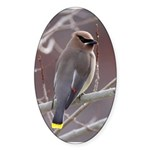 Wax Wing Sticker (Oval)