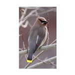Wax Wing Sticker (Rectangle 50 pk)