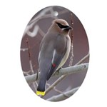 Wax Wing Ornament (Oval)