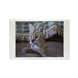 Funny Serval Rectangle Magnet