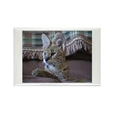 Cute Servals Rectangle Magnet