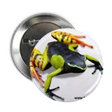 "Painted Madagascar Poison Fro 2.25"" Button (100 pa"