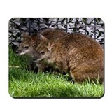 Wallabies Mousepad