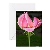 Rose Bud, Beautiful, Greeting Cards (Pk of 10)