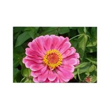 Pink Zinnia Rectangle Magnet (10 pack)