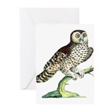 Canadian Owl Greeting Cards (Pk of 20)