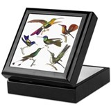 Six Pretty Hummingbirds Keepsake Box