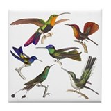 Six Pretty Hummingbirds Tile Coaster
