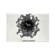 National Geographic Zebras Rectangle Magnet