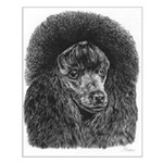 Black Poodle Pencil Drawing Small Poster