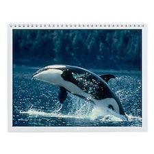 Orca Pen Wall Calendar