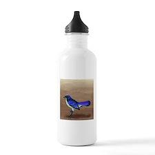 Scrub Jay Sports Water Bottle