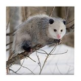 Opossum Love Tile Coaster