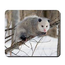 Opossum Love Mousepad