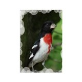 Rose-breasted Grosbeak Rectangle Magnet