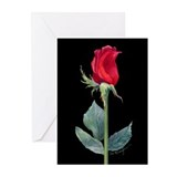 night rose Greeting Cards (Pk of 10)