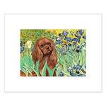 Irises & Ruby Cavalier Small Poster