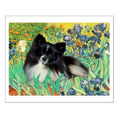 Irises / Pomeranian(bb) Small Poster