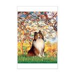 Spring / Sheltie (#1) Mini Poster Print