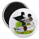 "Call Duck Quartet 2.25"" Magnet (100 pack)"