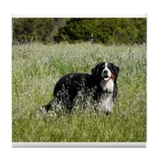 Bernese Tile Coaster