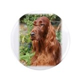 Irish Setter 9Y209D-090 3.5&quot; Button (100 pack)