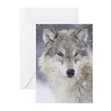 Snow Bound Greeting Cards (Pk of 20)