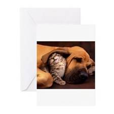 Dogs and cats Greeting Cards (Pk of 20)