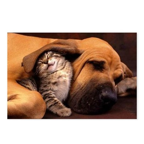 Dogs and cats Postcards (Package of 8)