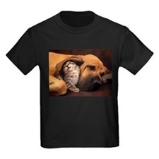 Dogs and cats T