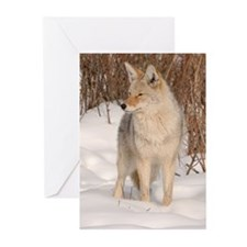 Winters Dog Greeting Cards (Pk of 10)