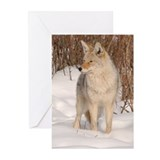 Winters Dog Greeting Cards (Pk of 20)