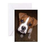 Sad puppy eyes Greeting Cards (Pk of 10)