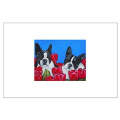 Boston Terriers & Tulips Posters