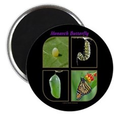 Monarch Metamorphosis Magnet