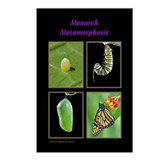 Monarch Metamorphosis Postcards (Package of 8)