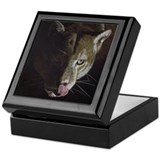 Cougar Night Keepsake Box