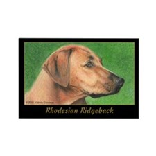 Rhodesian Ridgeback Rectangle Magnet (10 pack)