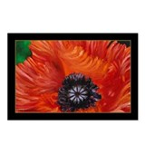 Red Oriental Poppy Postcards (Package of 8)