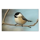 Chickadee Bumper Stickers